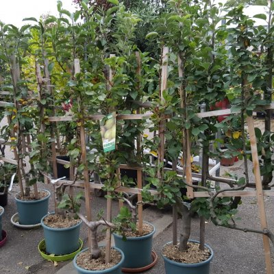 arbres-fruitiers-bourges-jardy-berry