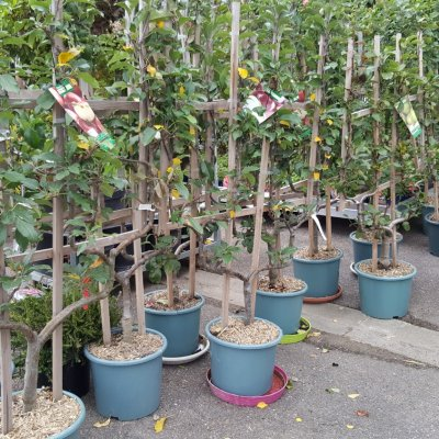 arbres-fruitiers-bourges-jardy-berry-2