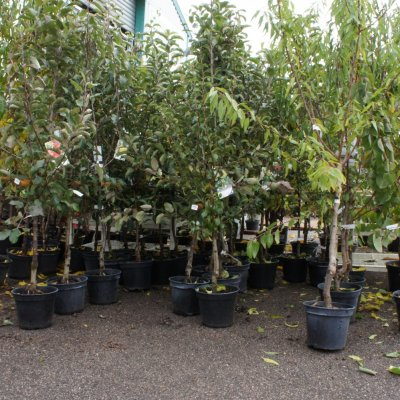 Arbres fruitiers Bourges