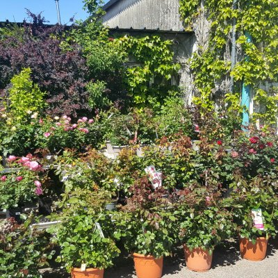Jardinerie Bourges Cher 18 Jardy Berry
